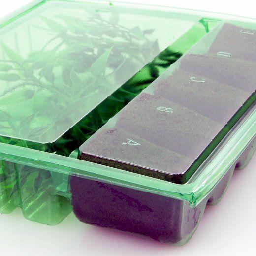 Versandbox für Stecklinge, 5 Plätze
