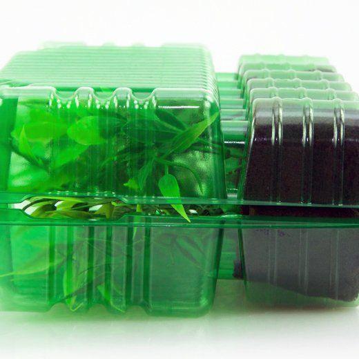Versandbox für Stecklinge, 12 Plätze
