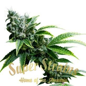 Eden CBD Feminised Seeds - Super Strains